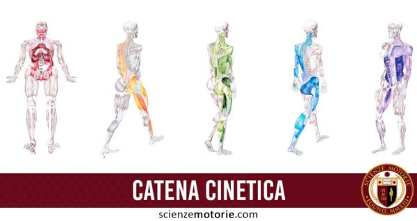 catena cinetica